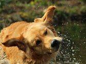 Ein Hund schüttelt sich nach einem Bad im See.