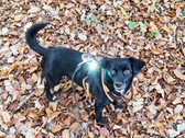 Hund mit Leuchtanhänger im Wald.