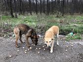 Zwei Hunde in Rumänien