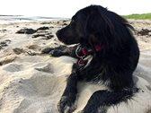 Hund liegt am Strand