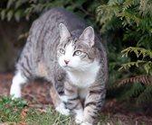 Eine Katze in einem Garten