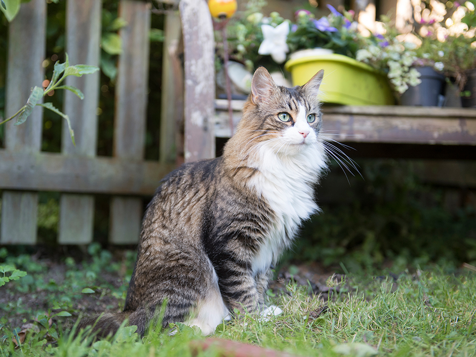 Groß Pete Die Katze Groovy Buttons Färbung Seite Fotos ...