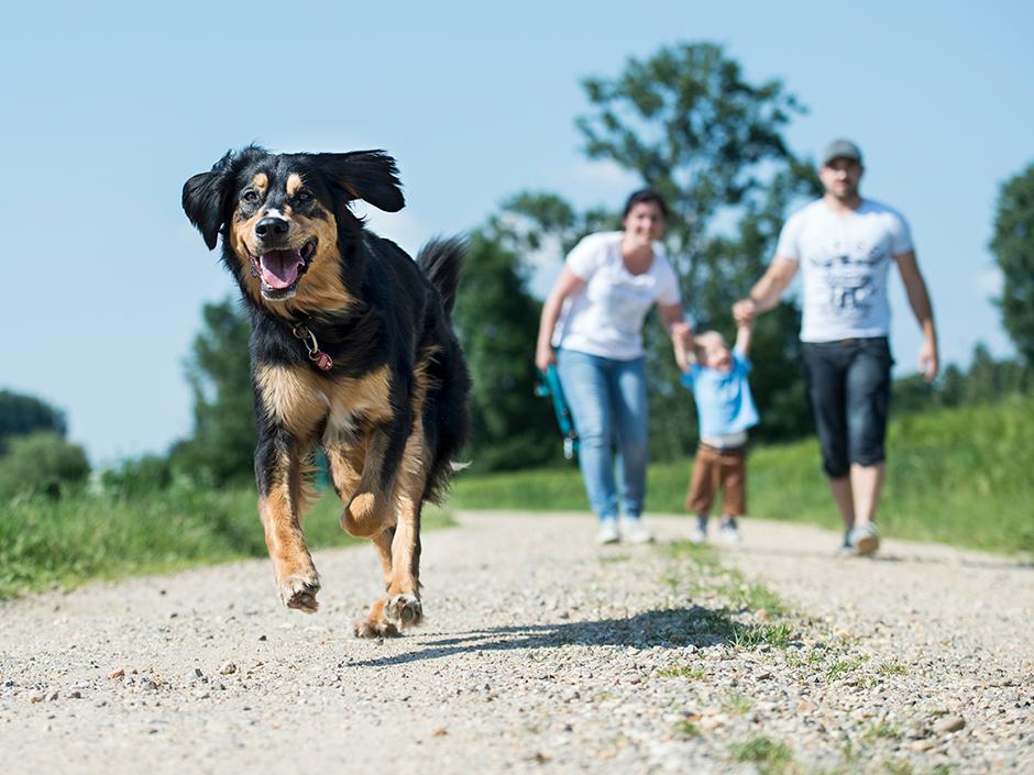 Ein Hund läuft vor seiner Familie.