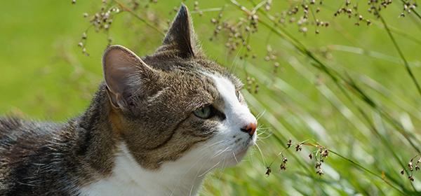 Eine Katze in der Wiese