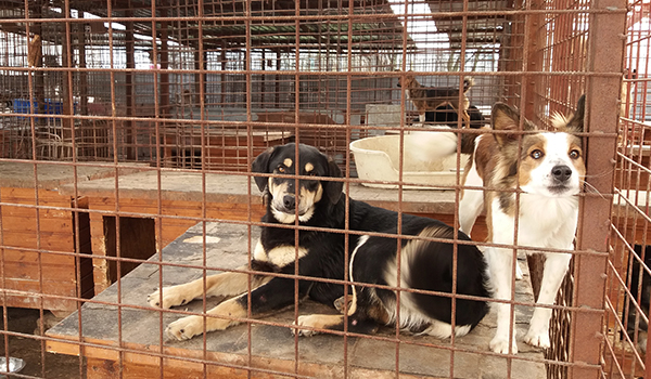 Hunde im Tierheim Targu Mures