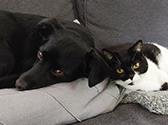 Hund und Katze liegen auf dem Sofa