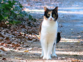 Katze draußen unterwegs.