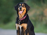 Suchtipps für entlaufene Hunde