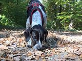 Ein Hund schnüffelt am Waldboden