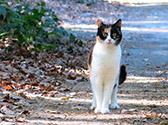 Eine Katze steht auf einem Waldweg