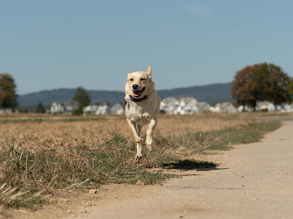 Mit hund machts Hund macht