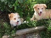 Zwei Hunde im Garten