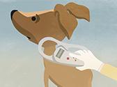 Ein Hund wird auf einen Transponder überprüft