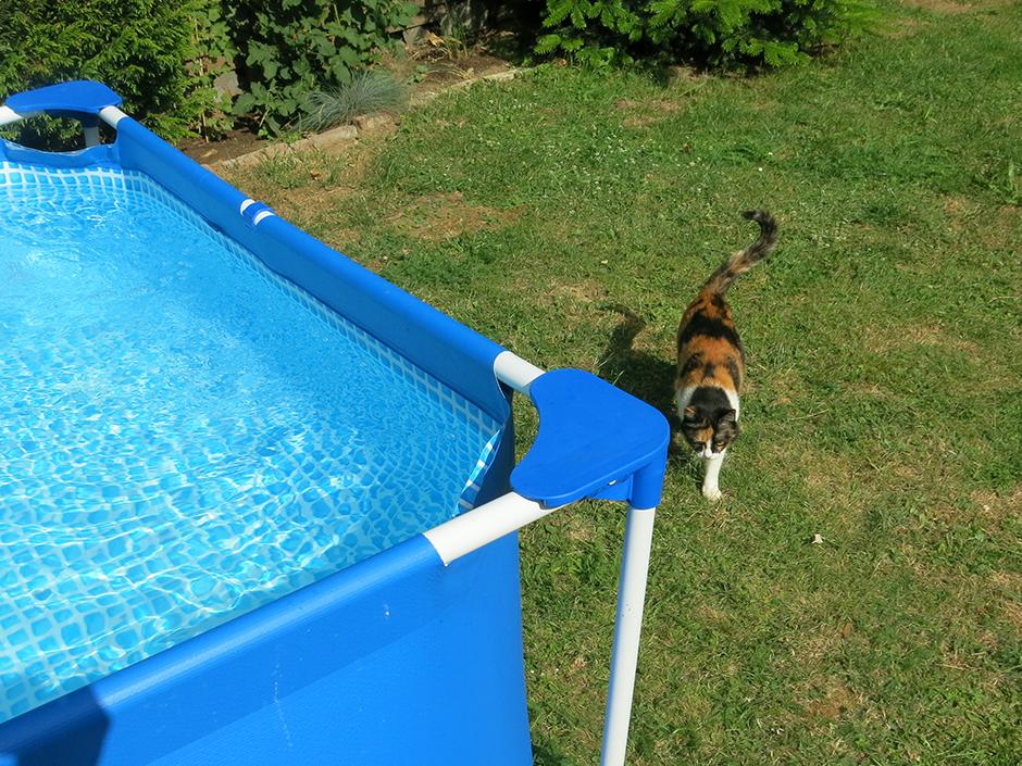 Katze neben einem Pool im Garten