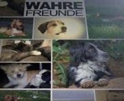 Wahre Freunde findest du im Tierschutz